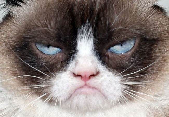 Grumpy-Cat large